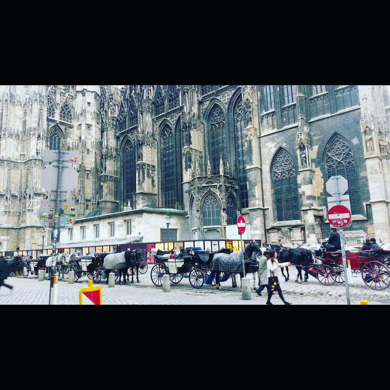 Vienna Vienna_city Vienna, Austria Chathedral Visiting Vienna Horses Austria
