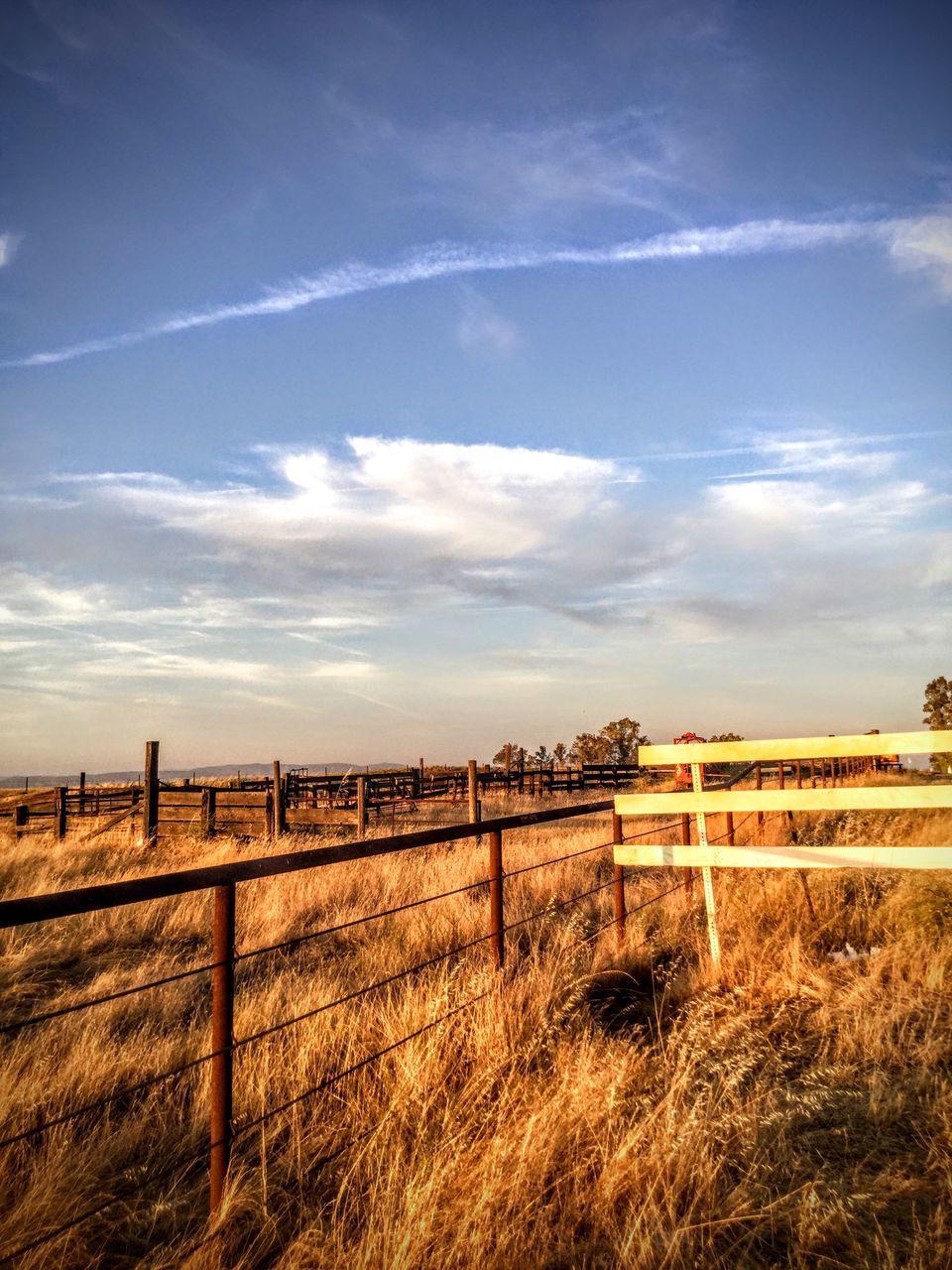 Rural Landscape At Dusk