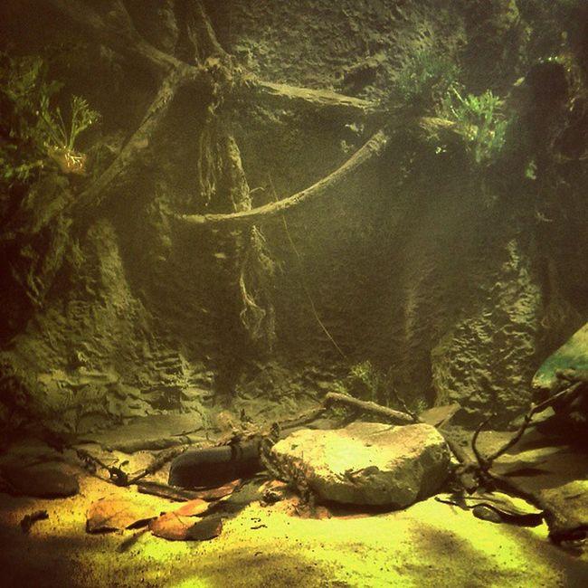 I Made This Belle_isle Aquarium Electric_eel