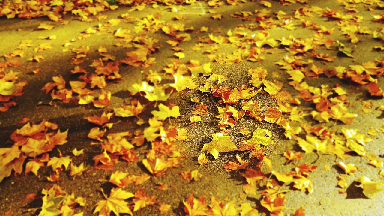 Nature Beautiful Sunlight Leaf Autumn Yellow Nature Outdoors Beauty In Nature Leaves First Eyeem Photo