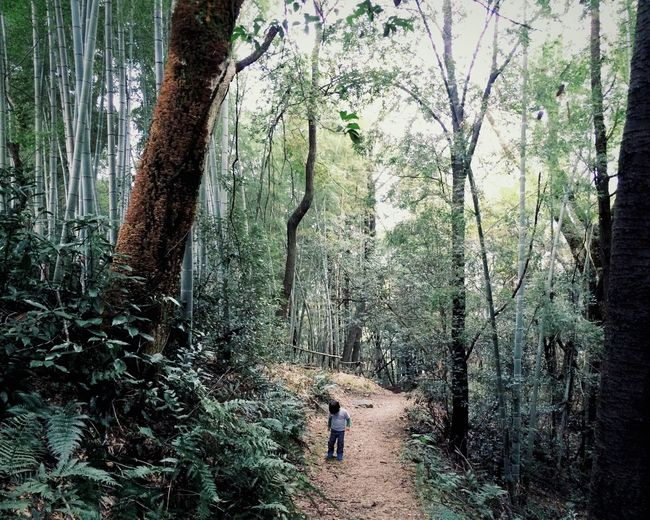Forest Mountain Boy Kid IPS2015Story Learn & Shoot: Single Light Source My Best Photo 2015 Adventure Buddies Youth Of Today Photography In Motion Urban Spring Fever Fine Art Photography Adventure Club