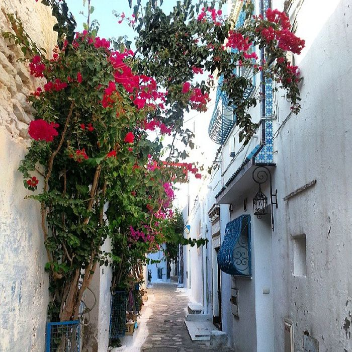 la Hammamet que j aime Tunisia Sun Summer old town