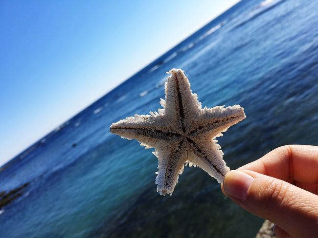 Hi! 絶景 千葉 Superb View Enjoy Ocean 鴨川 Chiba Kamogawa Sea 海 Happy Pretty Starfish