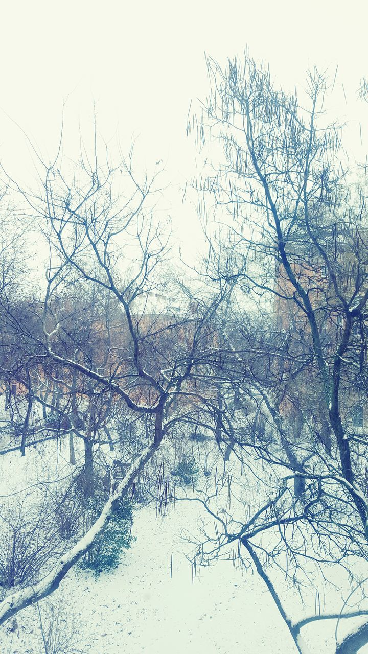 bare tree, winter, snow, cold temperature, tree, nature, beauty in nature, outdoors, day, no people, branch, landscape, tranquility, scenics, sky