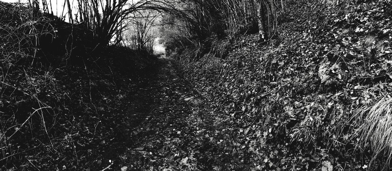 Autumn Iphone6 Mobilephotography IPhoneography Streetphotography Nature Blackandwhite Walking Around Andorra Monochrome Black & White Landscape Showcase: November
