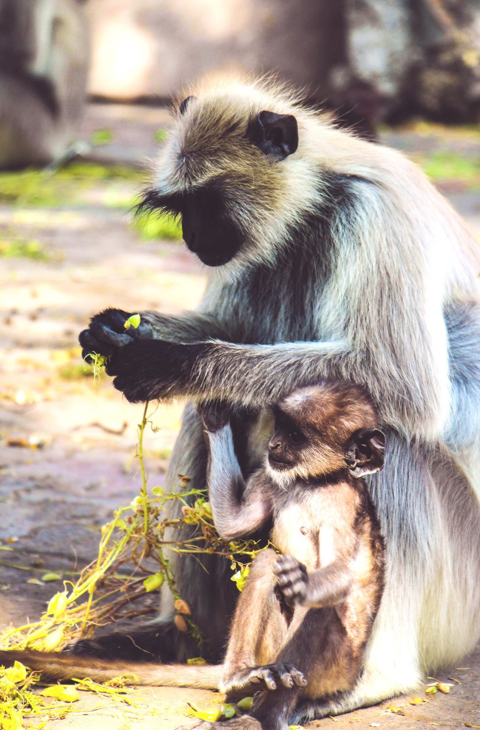 Mothers' love is everywhere, doesn't matter human or animal Animal Themes Mammal Animals In The Wild Animal Wildlife Togetherness No People Day Outdoors Nature Close-up Monkey (null)Love Motherlove Mother Child