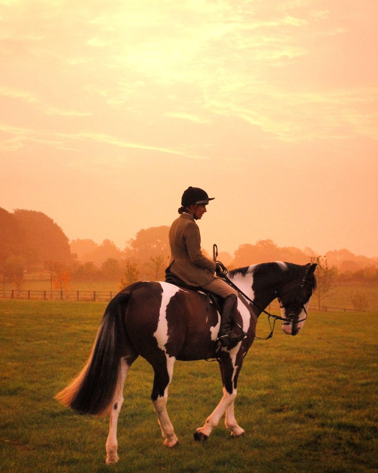 Beautiful stock photos of jagd, horse, horseback riding, riding, domestic animals