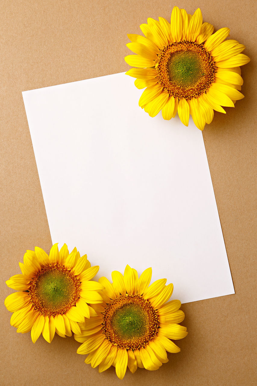 High Angle View Of Sunflowers And Blank Paper On Table