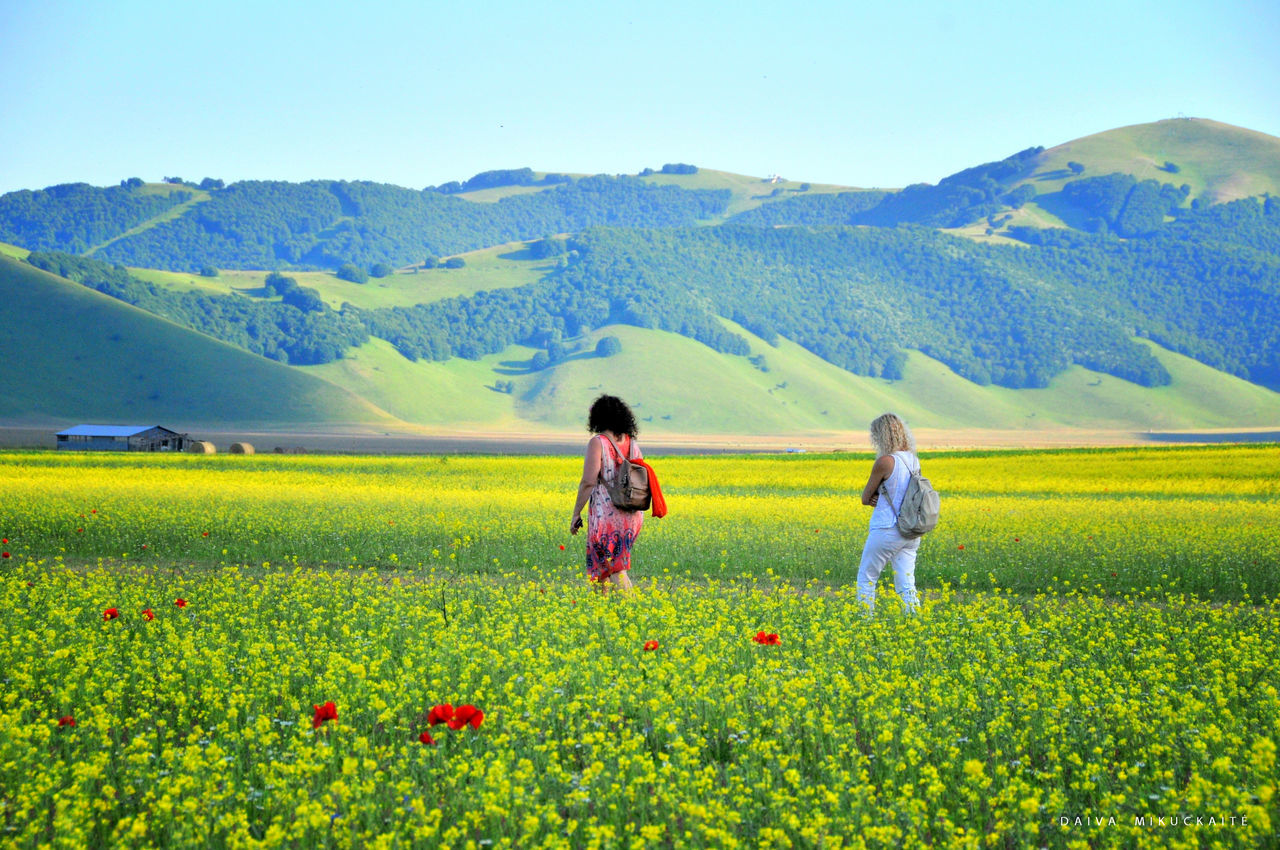 Castelluccio di Norcia Beauty In Nature Castelluccio Di Norcia Fields Italy Mountain Nature Outdoors Poppy Flowers Summer Summertime