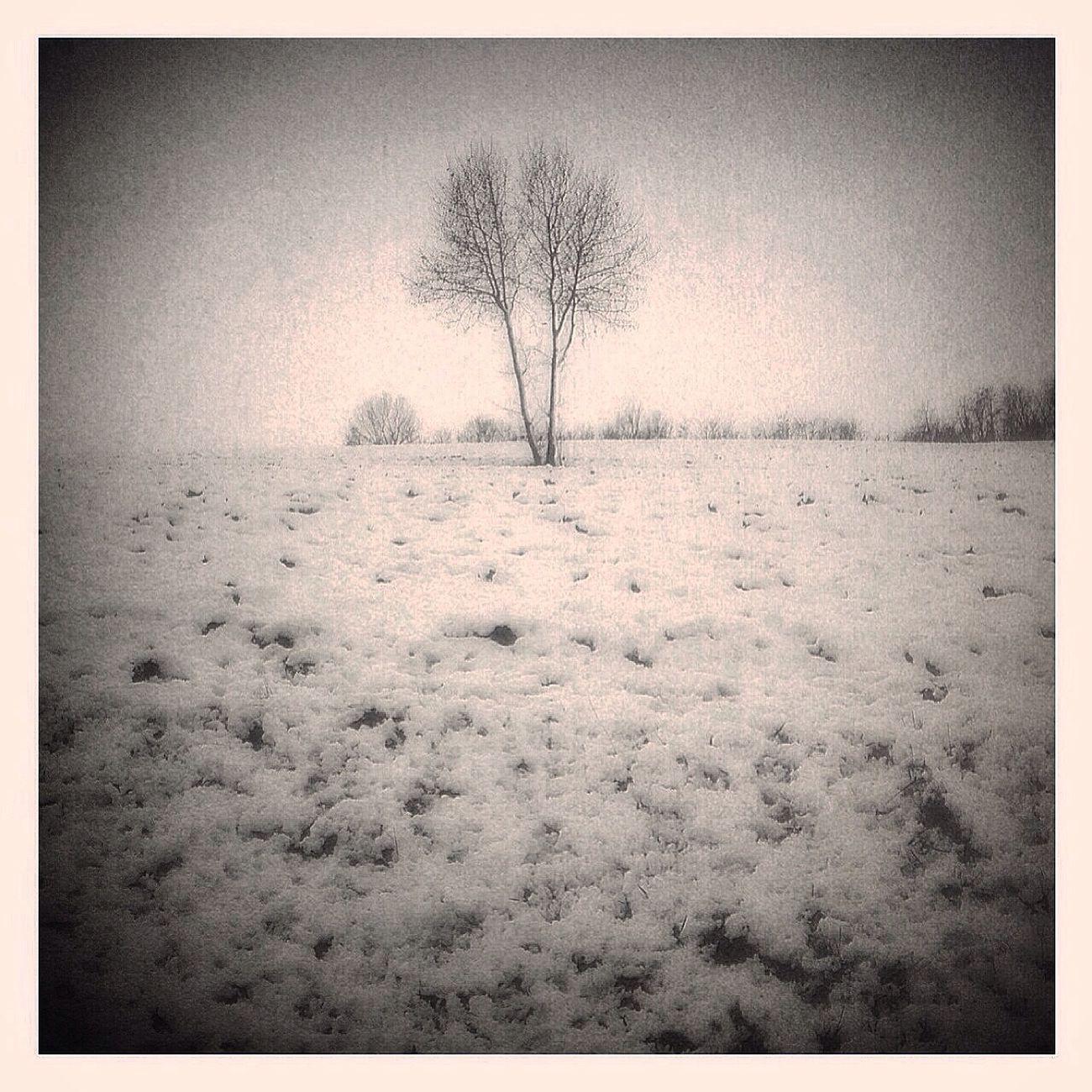 Landscape Blackandwhite Snow