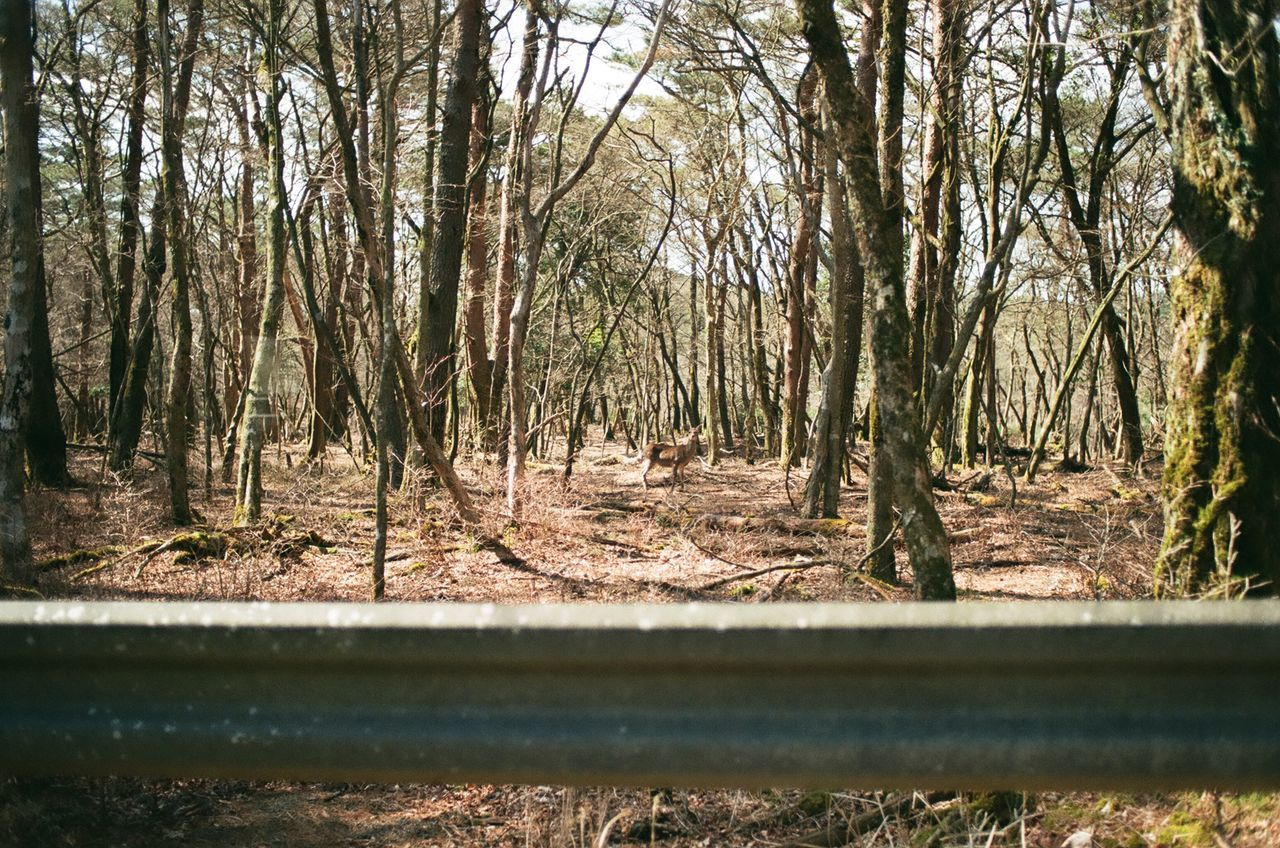 Are you looking at me Barrier Deer Film Photography Fuji業務用1 Gaze Japan Nature Tree