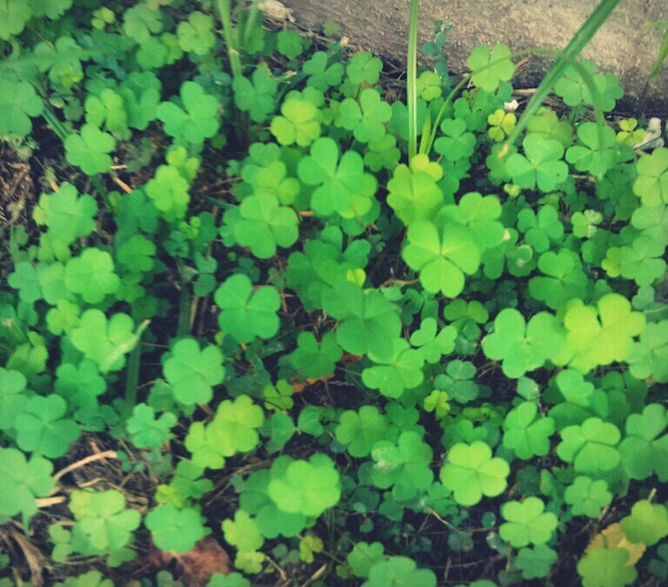 Clovers  Good Luck I Need For The Love
