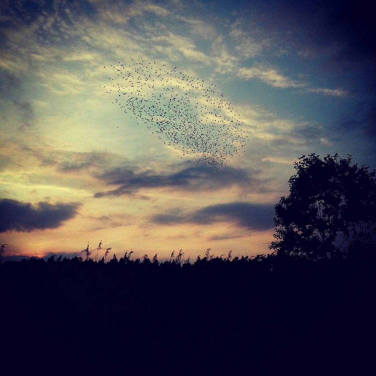 Blachownia Sunset Sun Sky Poland Polska Arcy Arcymonek