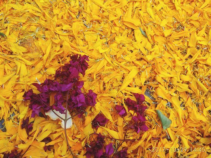 EyeEm Selects Flower Dia De Muertos México