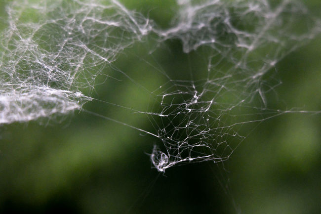 Spider's Web Beauty In Nature Close-up Day Detail Focus On Foreground Fragility Green Color Growth Natural Pattern Nature No People Outdoors Plant River Sam Kratzer Selective Focus Silk Spider Spider Web Tranquility Weather Web