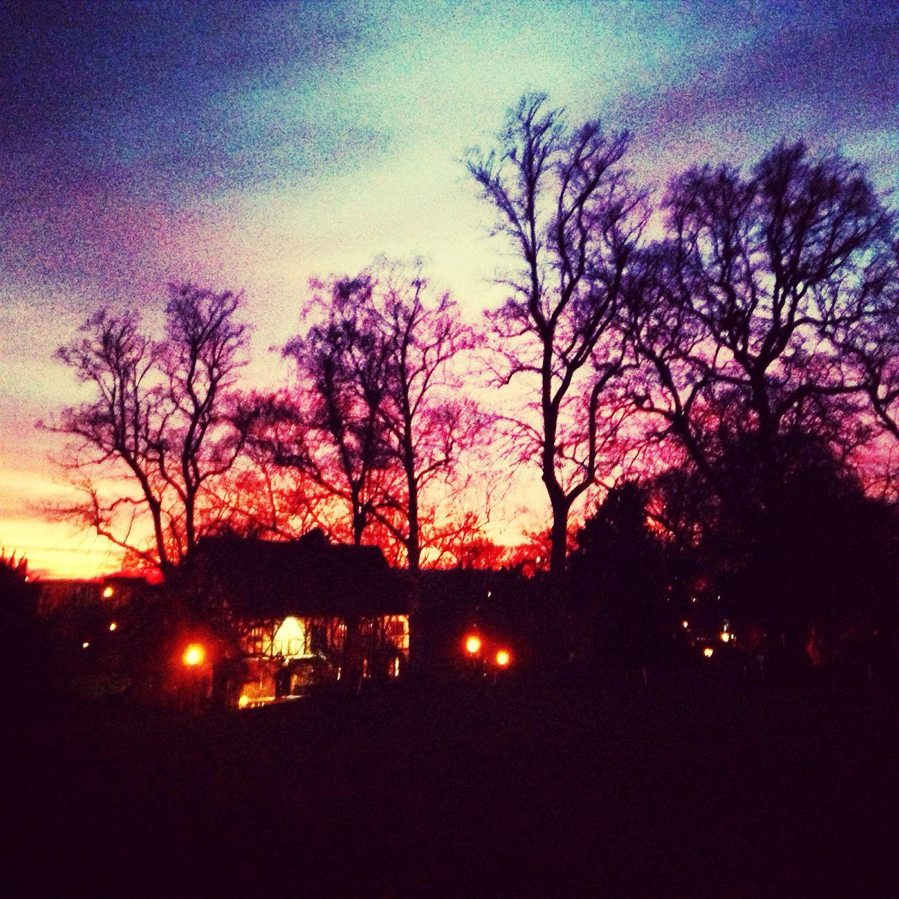 Candy Skies ? Treenporn Candysky England Sunset