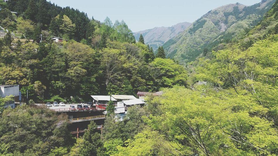 Mountain Tree Nature Vacations Mountain Range Freshness Scenics Japan Shikoku