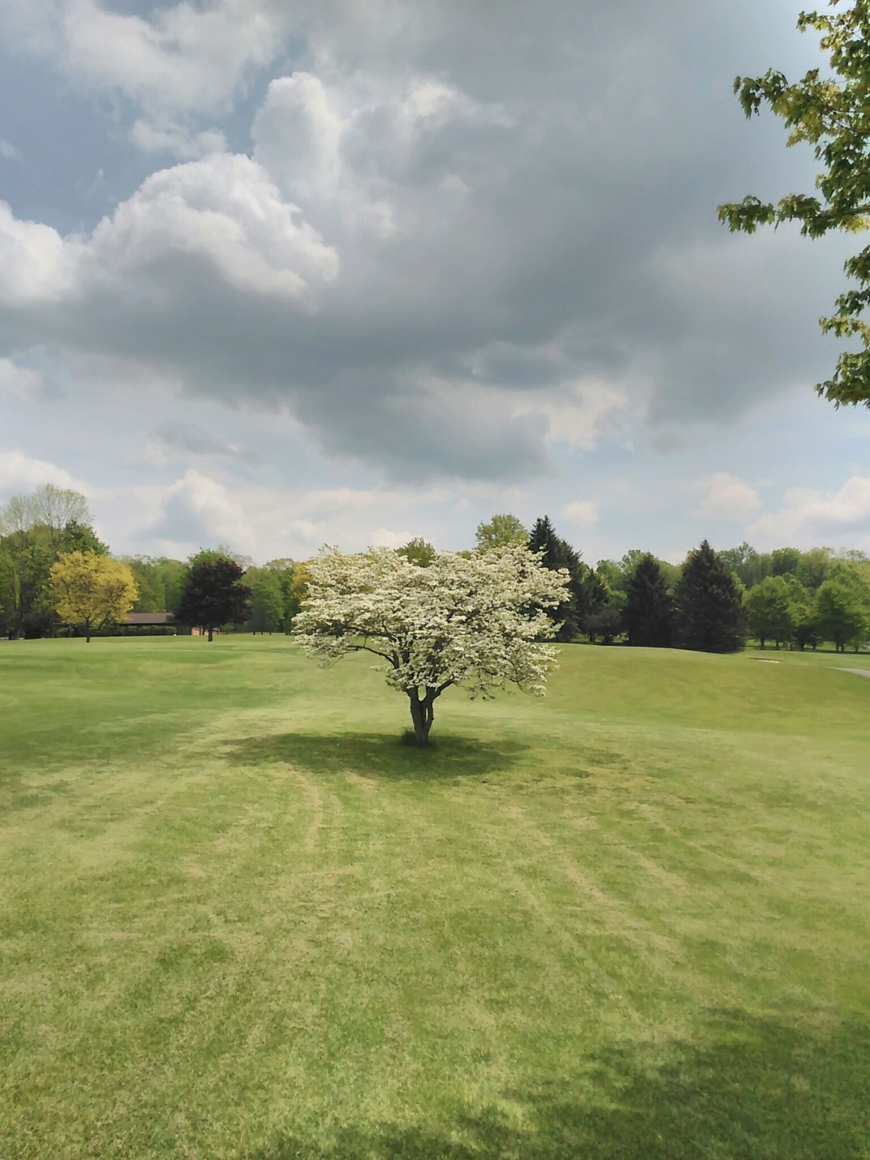 tree, sky, grass, cloud - sky, tranquil scene, tranquility, green color, landscape, field, cloudy, growth, scenics, cloud, nature, beauty in nature, grassy, day, idyllic, outdoors, green