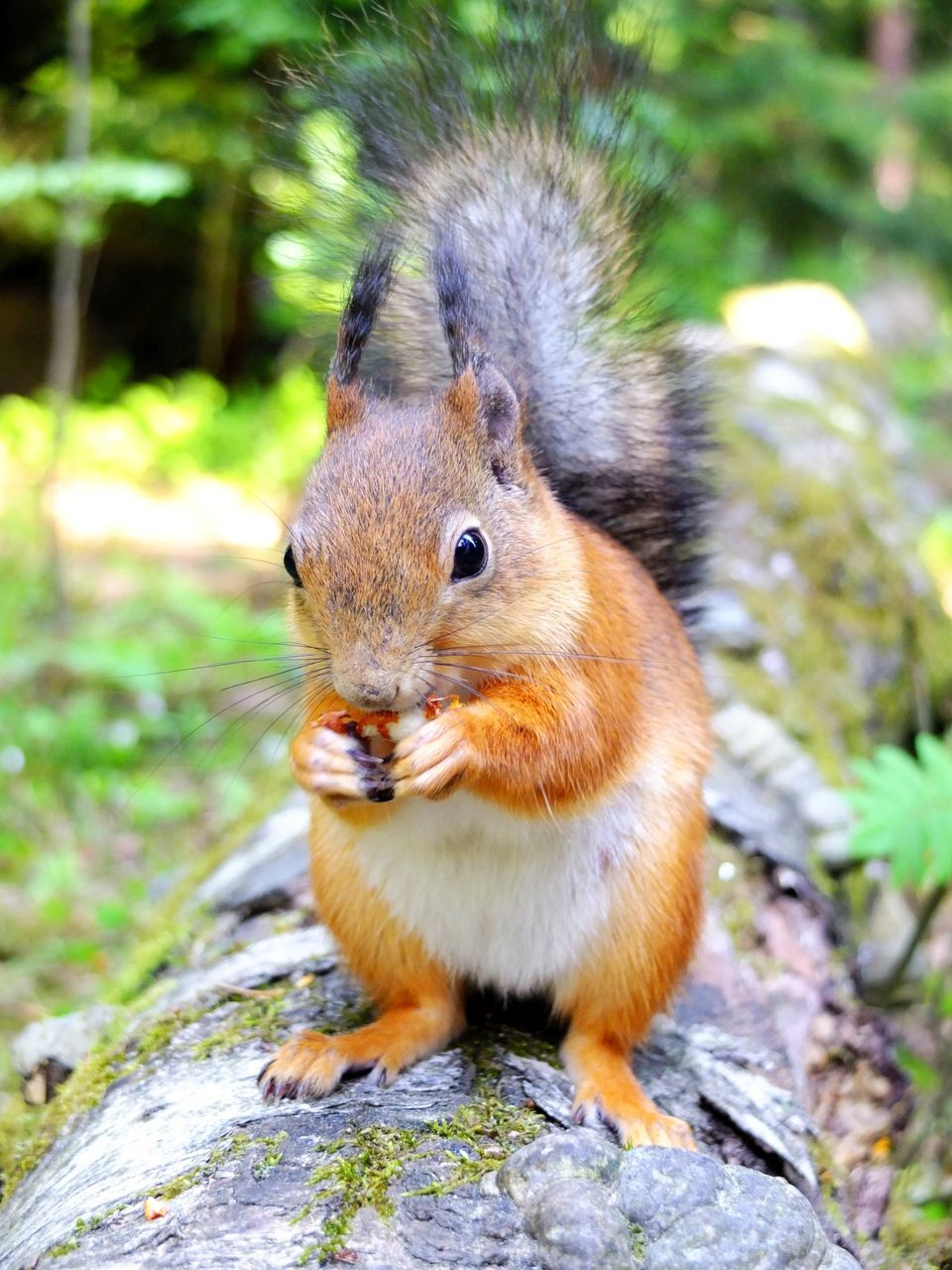 squirrel, one animal, animals in the wild, animal themes, mammal, outdoors, animal wildlife, day, nature, eating, focus on foreground, no people, food, close-up