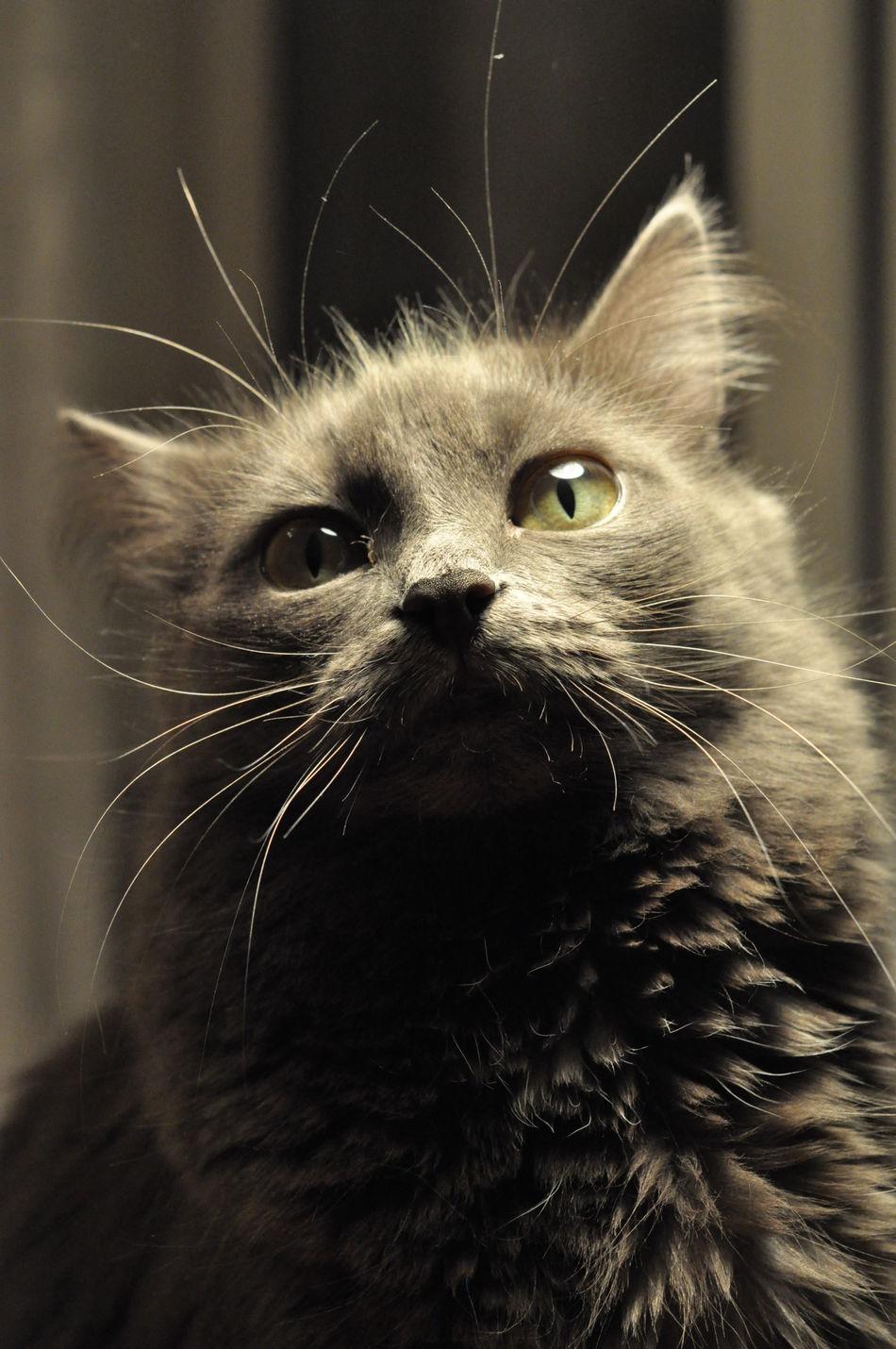 Cat Gray Nature Взгляд  кот кошка свет серый