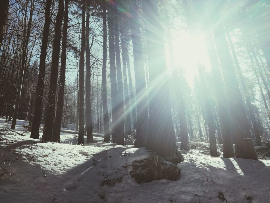 Sunlight Sunbeam Sun Tree No People Nature Beauty In Nature Sky Day Outdoors Trees Of Eyeem Treestagram Trees And Sky Trees Sunlught Through The Trees Look Through Landscape Scenics Forest Beauty In Nature Nature Winter Cold Temperature Snow Huaweiphotography