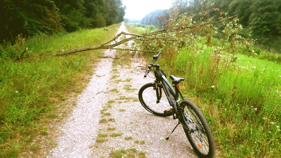 @lilys_pics Bicycle Bike Nature Road Tree Walk Way Alsace Tranquility Wood Fallen Tree