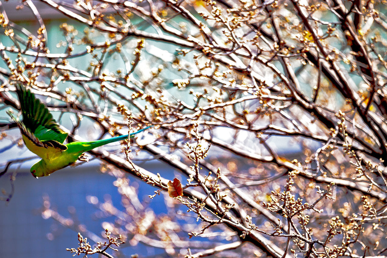 Rose Ringed Parakeet Animal Animal Themes Animals In The Wild Beauty In Nature Bird Close-up Day Fly Jump Jumping Low Angle View Nature Nature Nature Photography Nature_collection One Animal Outdoors Rose Ringed Parakeets TakeOff Tree Tree Wings