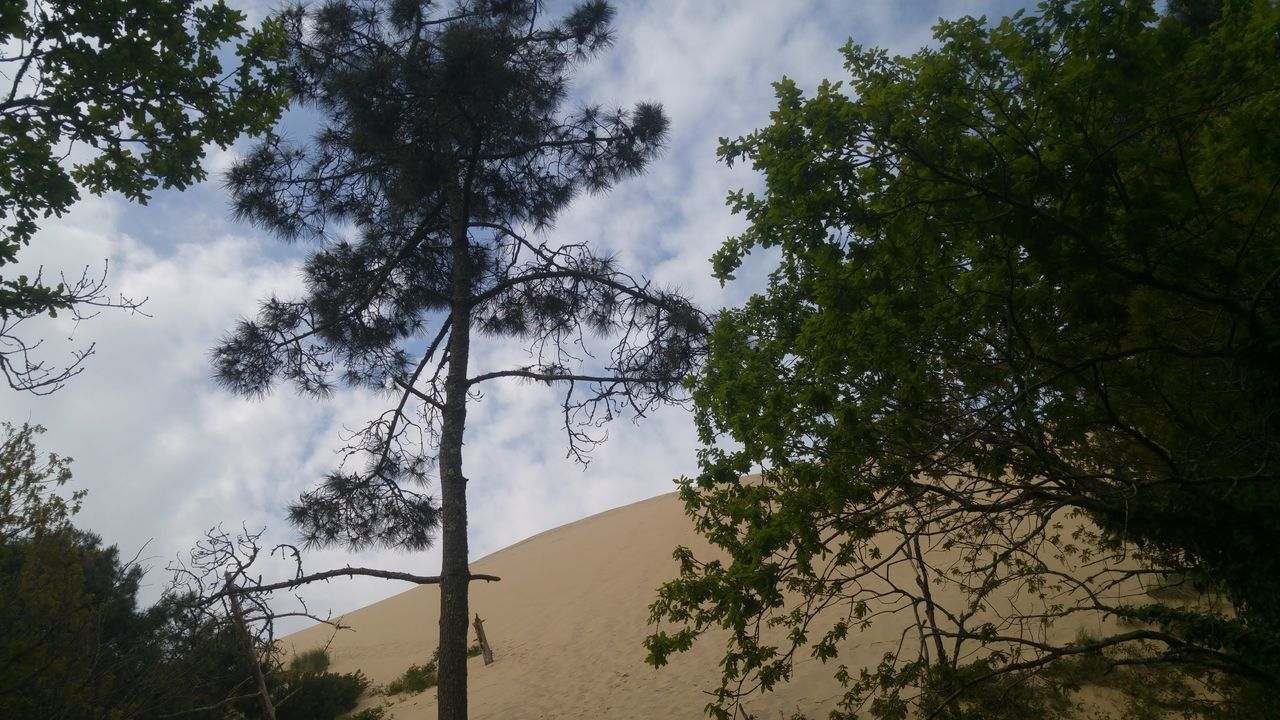 Dune Du Pyla Tree Low Angle View Sky Outdoors Day Cloud - Sky No People Nature No Filter Beach