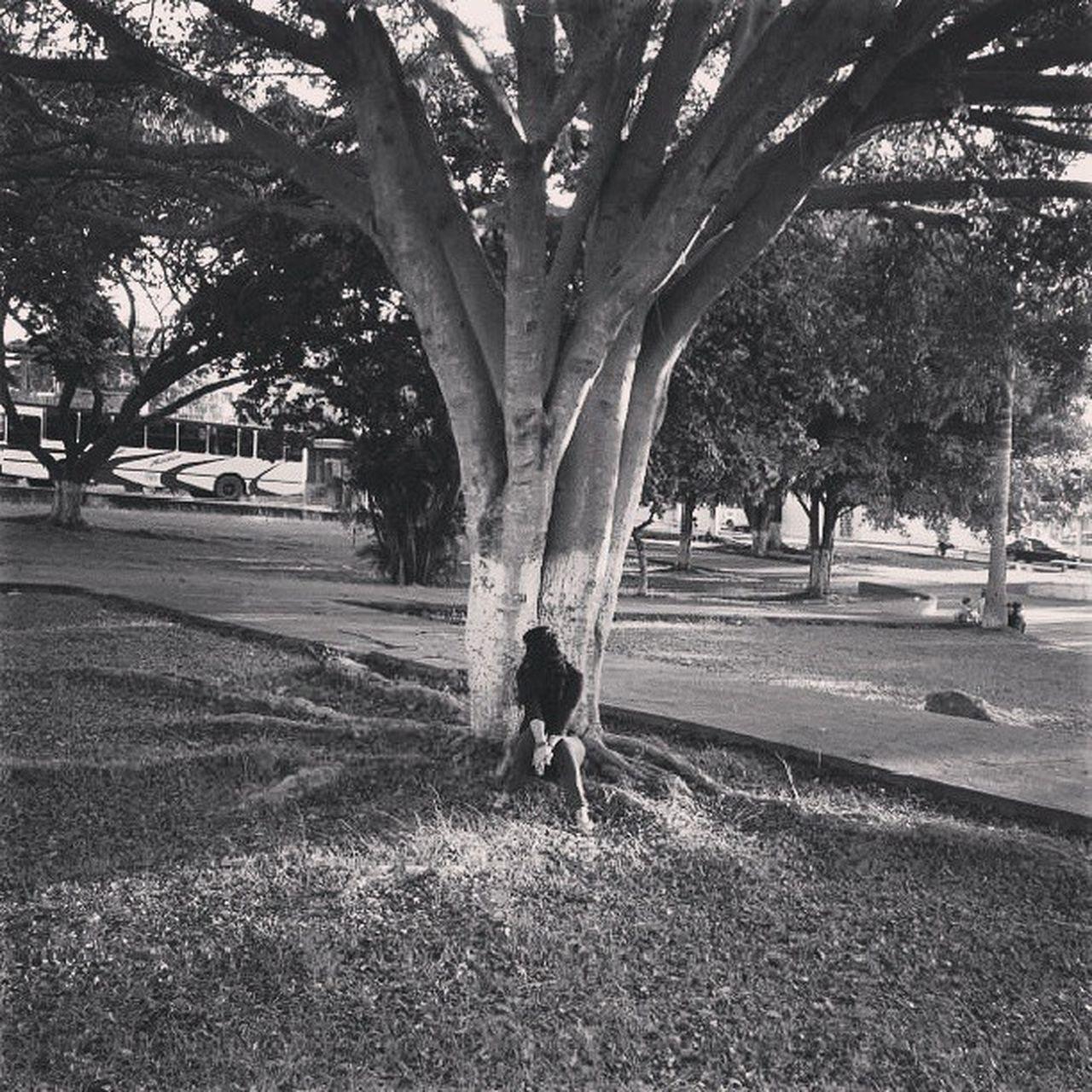 Dotspin Betosalvestrini Art Original Natural Nature Plants Peace Tree Venezuela Sanjuandecolon - exotic