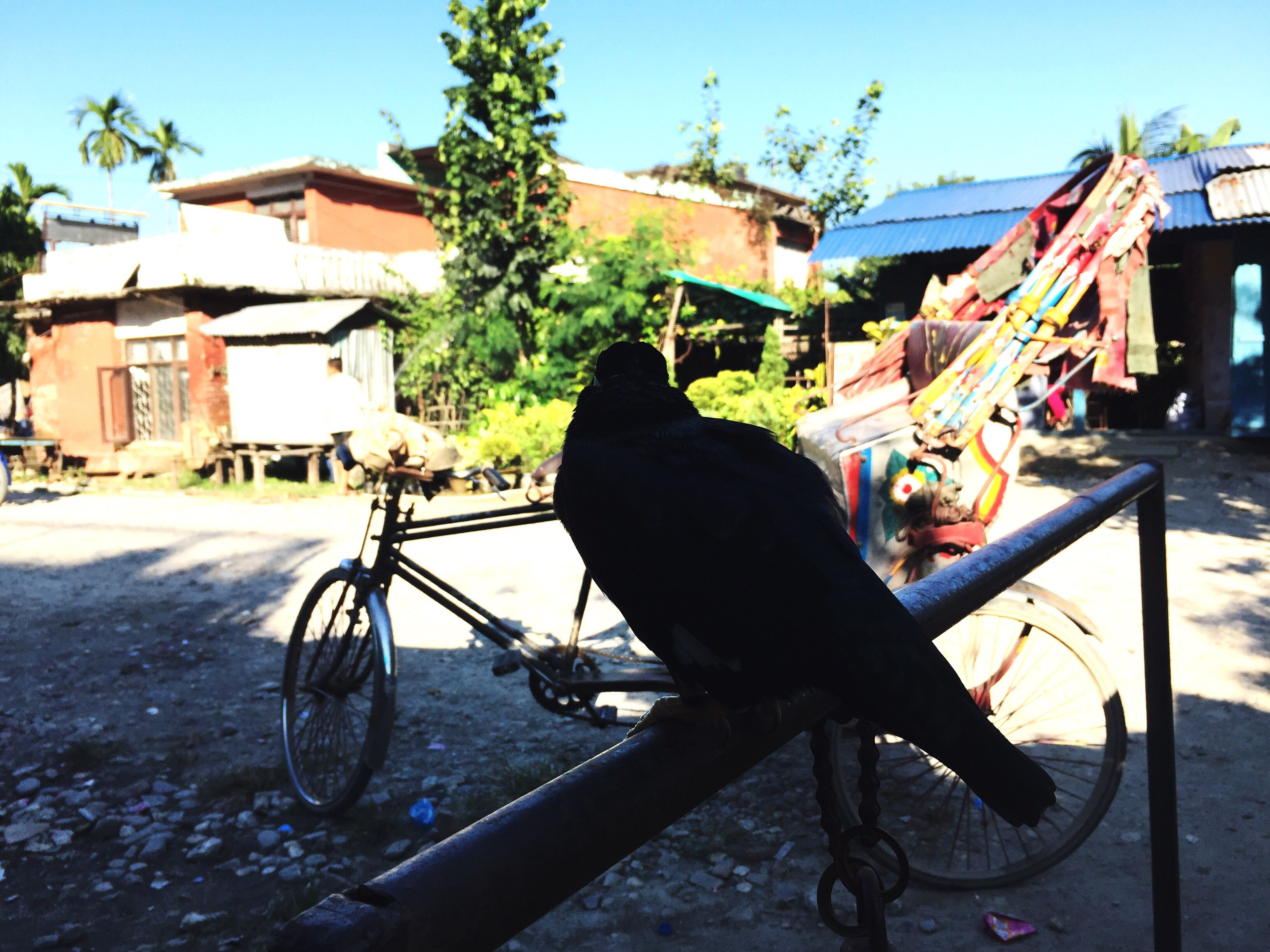 Through A Bird It Copies Human Voice First Eyeem Photo