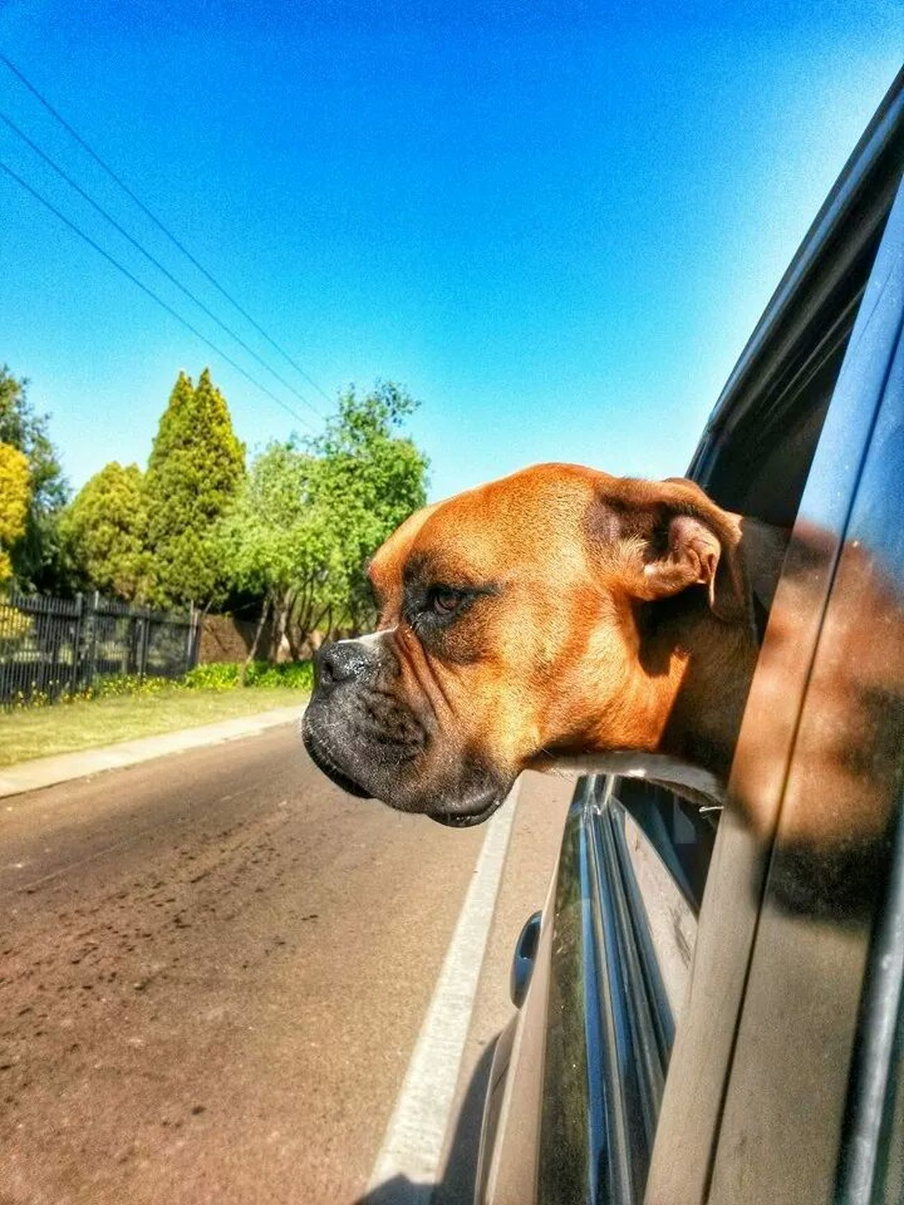 Dog Buster Bulldog Taking Photos