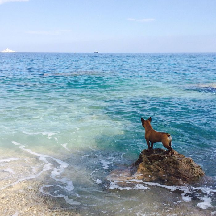 Protecting where she plays :) Protecting Where We Play Mediterranean  Sea Sky Mothernature Earth Summertime France Summer Dog