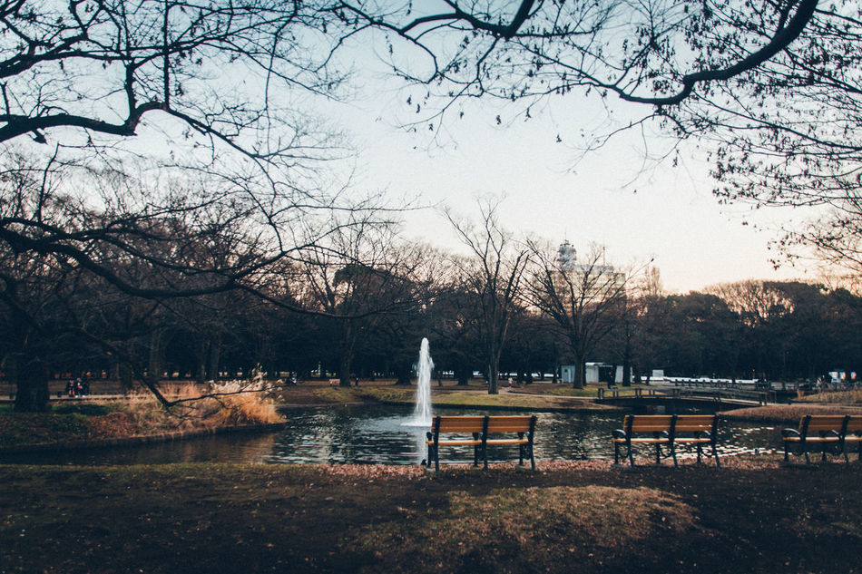 Bench Melancholic Landscapes New Vintage Silence Beautiful Nature Beauty In Nature Atmospheric Mood Day Enjoying Life EyeEm Best Shots EyeEm Gallery Fountain Fragility Landscapes Light And Shadow Nature Naturelovers Outdoors Pond Silhouette Sky Sky And Trees Tranquility Trees Winter Break The Mold