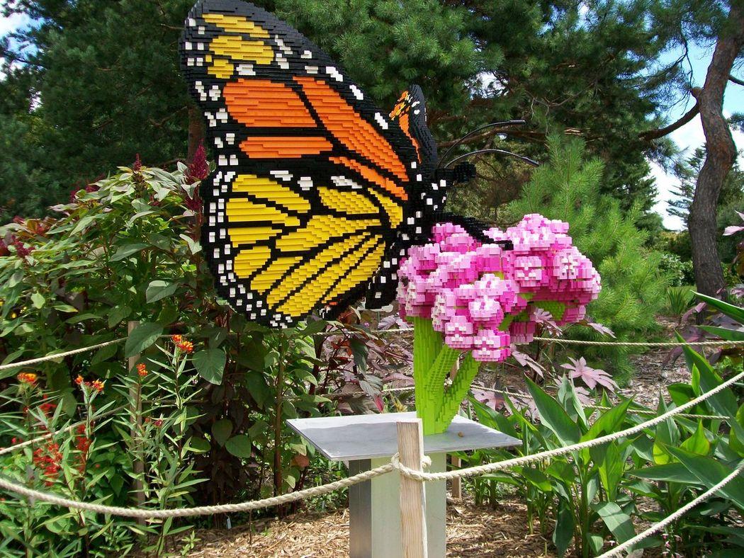 Monarch Butterfly On Flower. Legos
