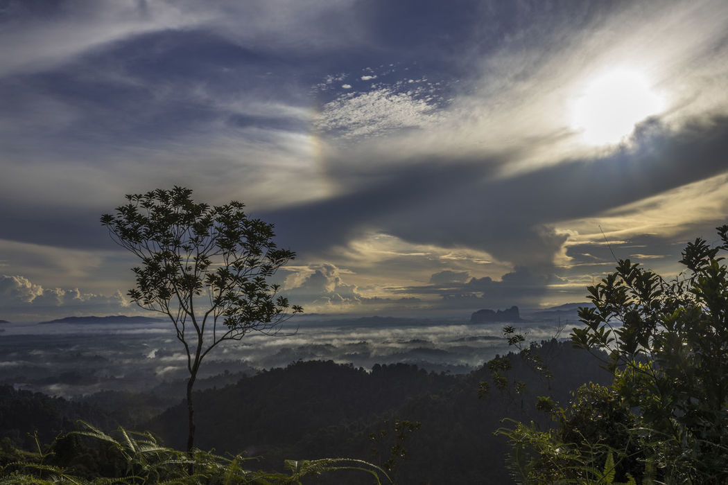 Sunrise at Panorama Hill, a popular tourist spot to watch sunrise at Sungai Lembing, Malaysia. Beauty In Nature Cloud - Sky Day Growth Landscape Nature No People Outdoors Panorama Hill Scenics Sky Sungai Lembing Sunset Tranquil Scene Tranquility Tree
