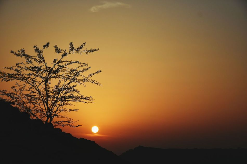 Sunset Tree Orange Color Silhouette Dramatic Sky Nature Beauty In Nature No People Moon Close-up Outdoors Sky Branch Tree India Backgrounds Scenes Pictureoftheday Glare Of The Sun Jodhpur India Nikon340