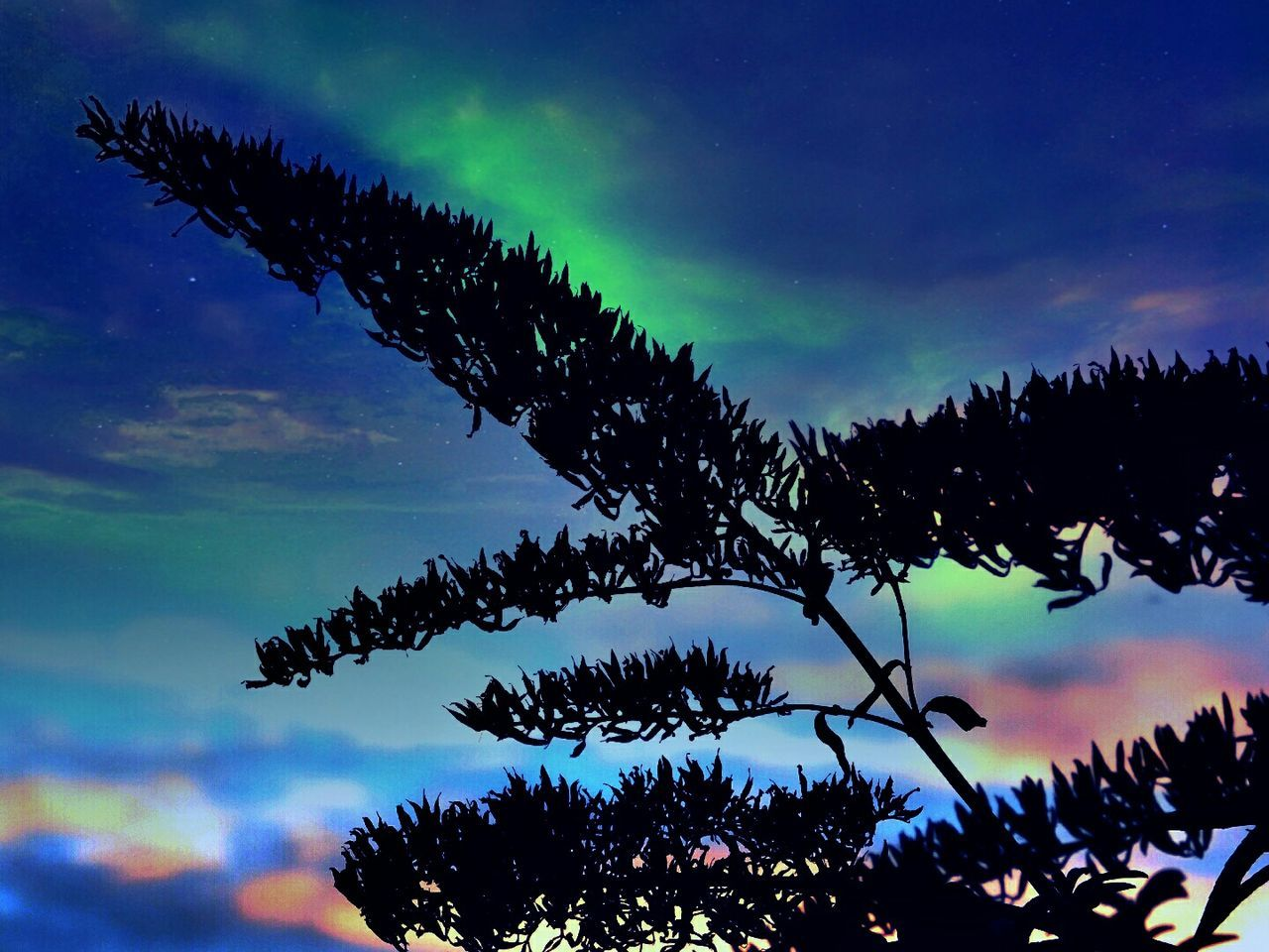 Low Angle View Of Silhouette Tree Against Aurora