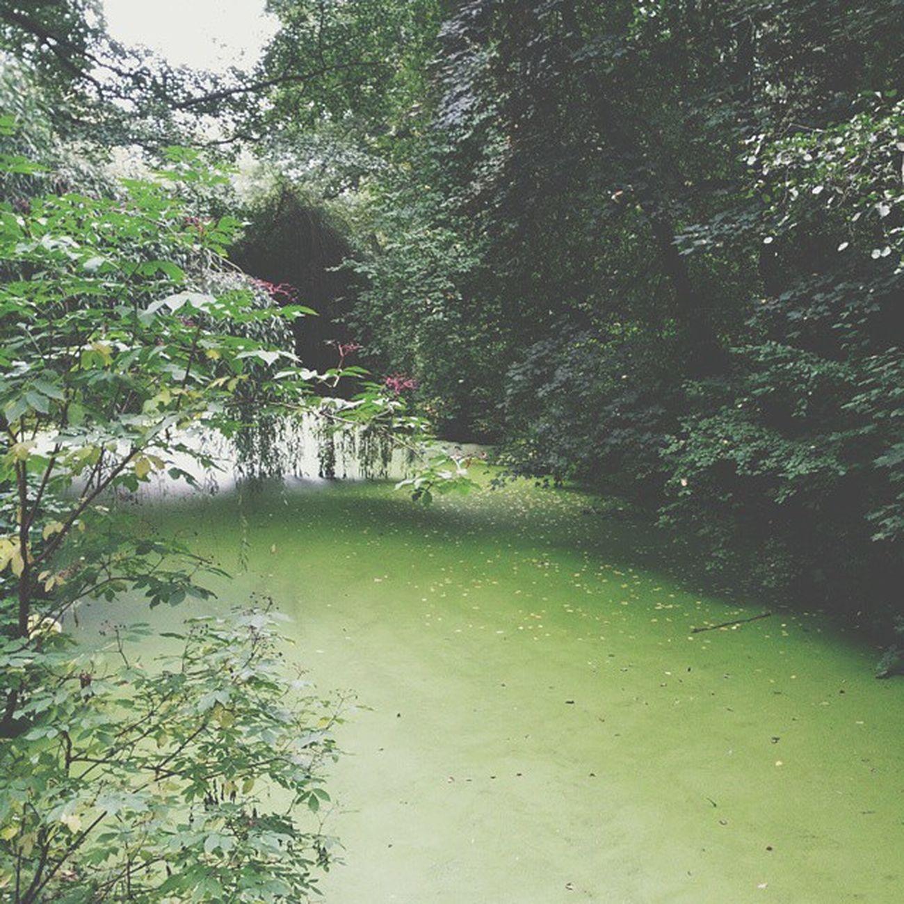 Para os anônimos que fizeram desafio do gelo sem doar nada: desafio vocês a se jogarem num pântano. Pantano Berlin Swamp Desafio