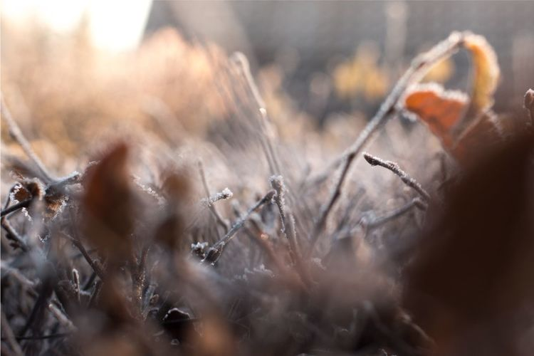 Close-up Nature No People Outdoors Day Dried Plant Fragility Depth Of Field Canonphotography Canon 70d Canon EOS 70D Branch Hedge Winter Frozen Nature Canon Canon_photos Canon Eos  Wintertime Winter Wonderland Eyeembestsellers 50mm F/1.4 50mm Canon_official