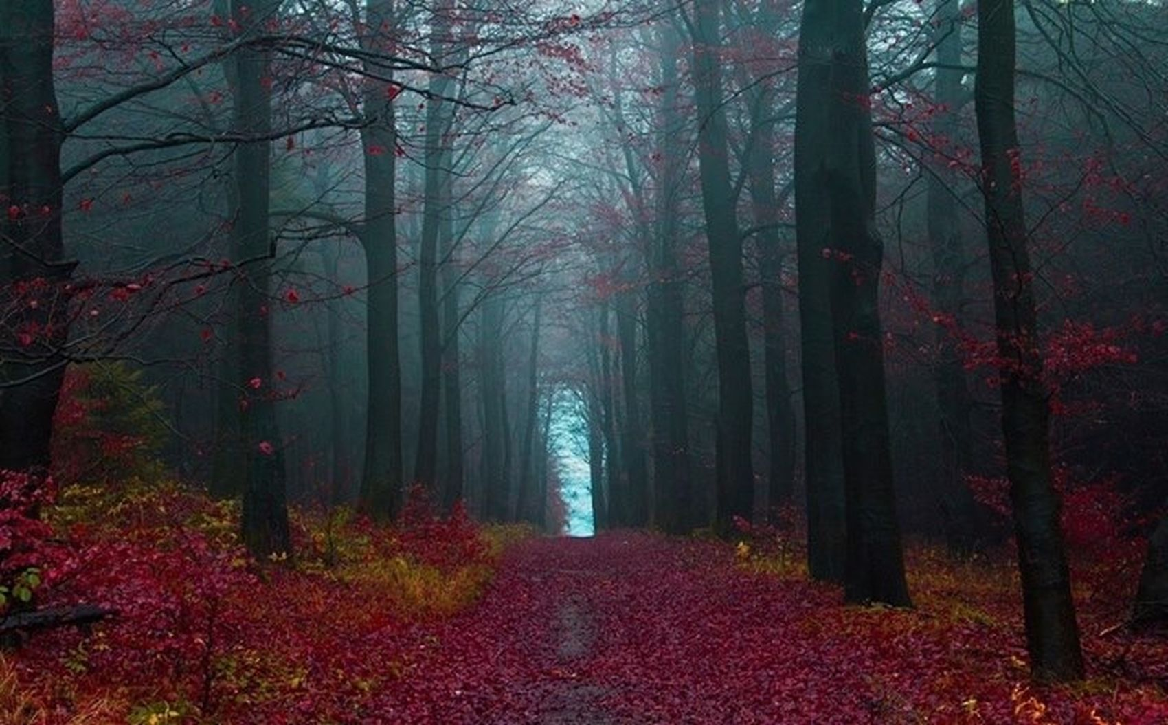 Black Forest !!!! Foggy Hello World Landscape_Collection The Stylist - 2014 EyeEm Awards Photography