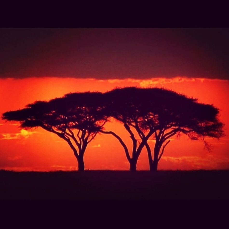 Africa tree..
