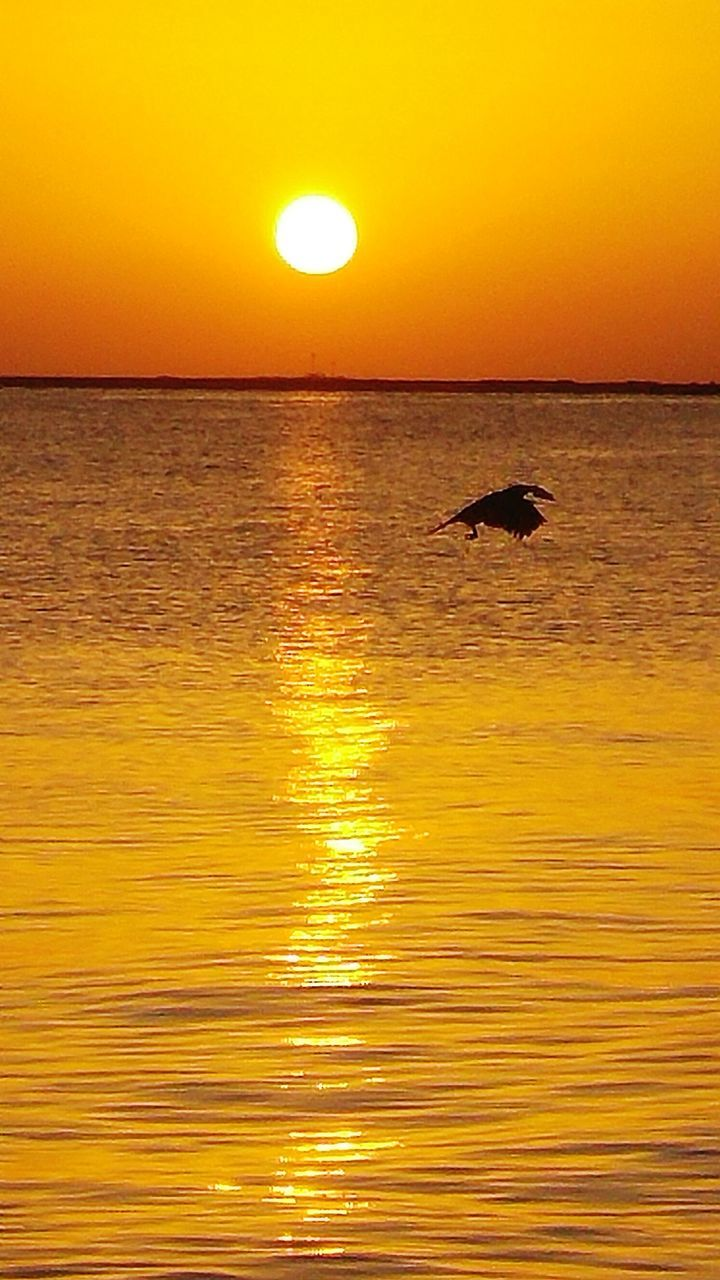 sunset, orange color, sun, one animal, beauty in nature, nature, sea, scenics, silhouette, animal themes, reflection, animals in the wild, water, animal wildlife, bird, tranquil scene, idyllic, sky, outdoors, horizon over water, tranquility, waterfront, yellow, no people, mammal, day