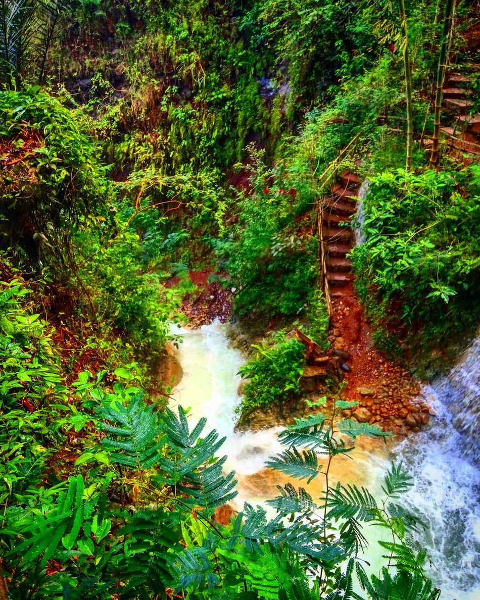 Tree Forest Water Scenics Beauty In Nature Motion Tranquil Scene Nature Growth Waterfall Tranquility Green Color Plant Outdoors Day Stream Green Non-urban Scene Lush Foliage Flowing Water