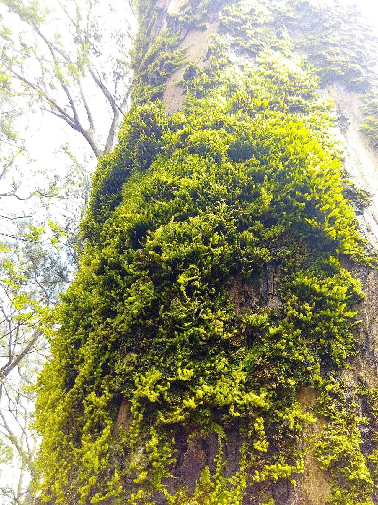Beautiful Nature Nature Photography Nature_collection Tree_collection