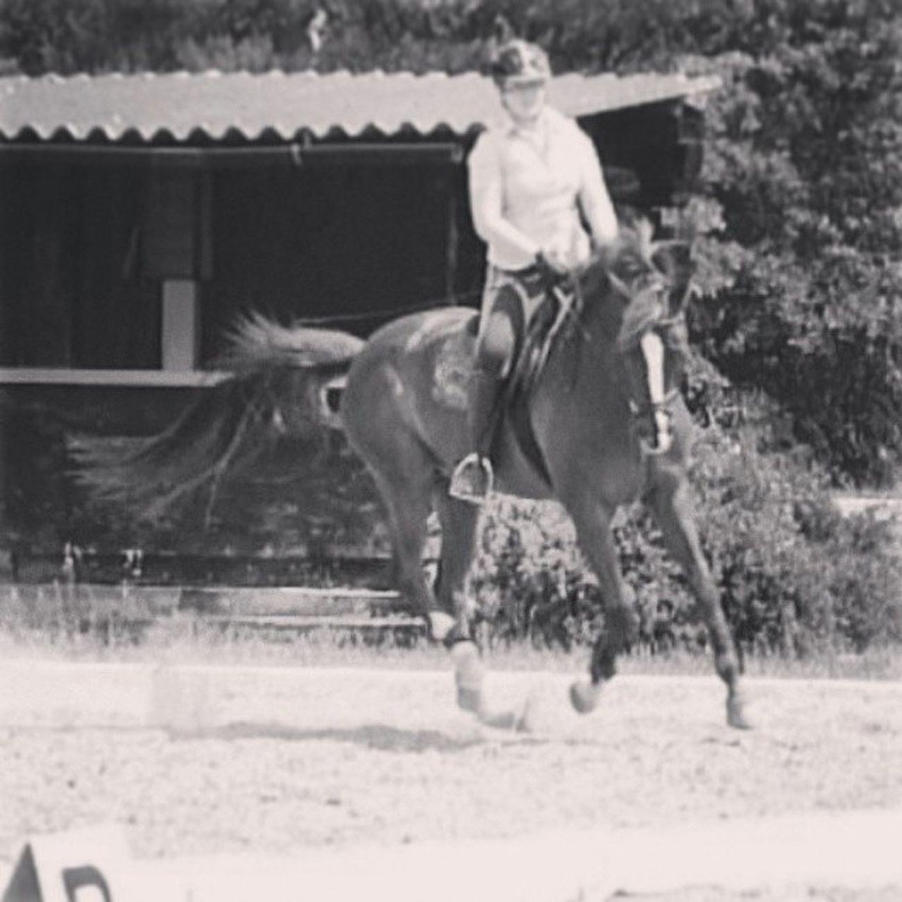 Dressur Galopp Gangart Dressurstunde ReitunterrichtSommerPferdHorseDressageDressurpferdDressurreitenTrakehnerWallachFlashOvermeiner191111schöneZeithartesTrainingChampionfollow4followspam4spam Ein Tanz zwischen Pferd und Reiter