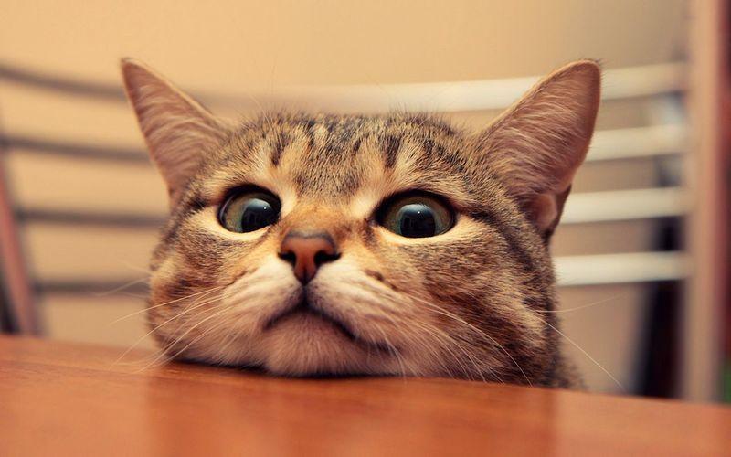 Alwaus Cute Cute Kitty