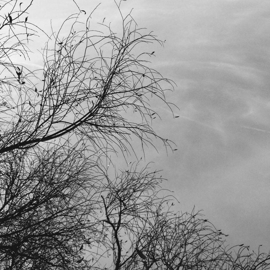 Blackandwhite Vscocam AMPt_Nature Winter