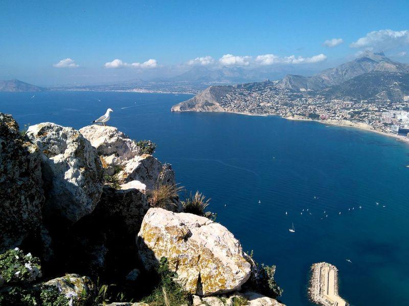 Peñón De Ifach Calpe Alicante España In the heights with a Seagull