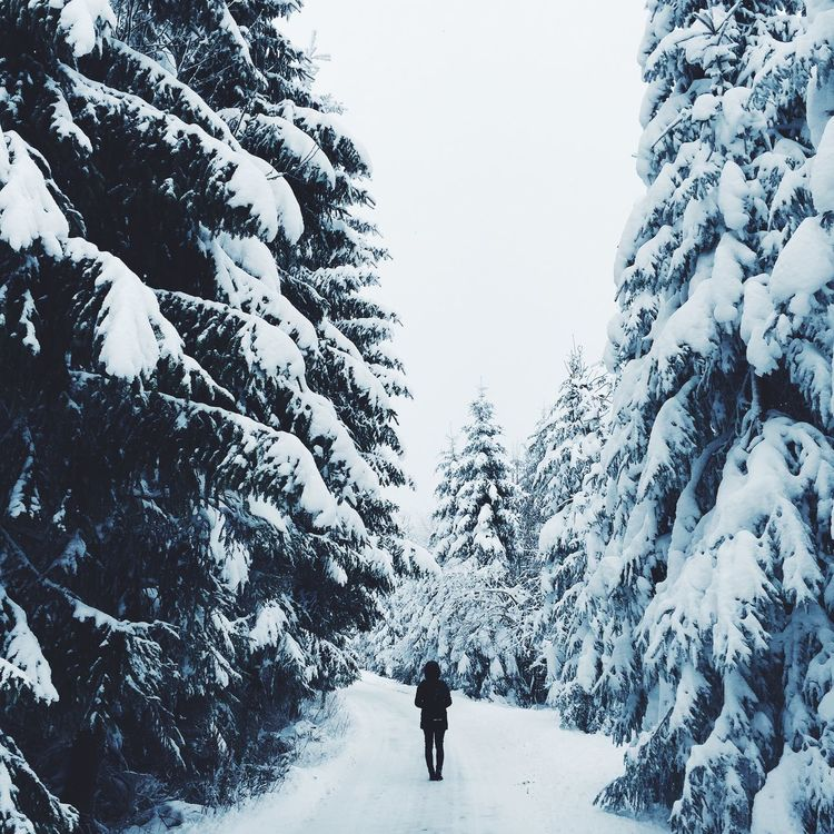 Nature Collection Winter Winter Trees Vscocam Snow Cold Winter ❄⛄