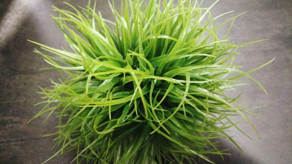 Showcase: December Green Grass Ball Of Grass Handfull
